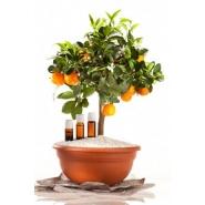 Orangenöl bio